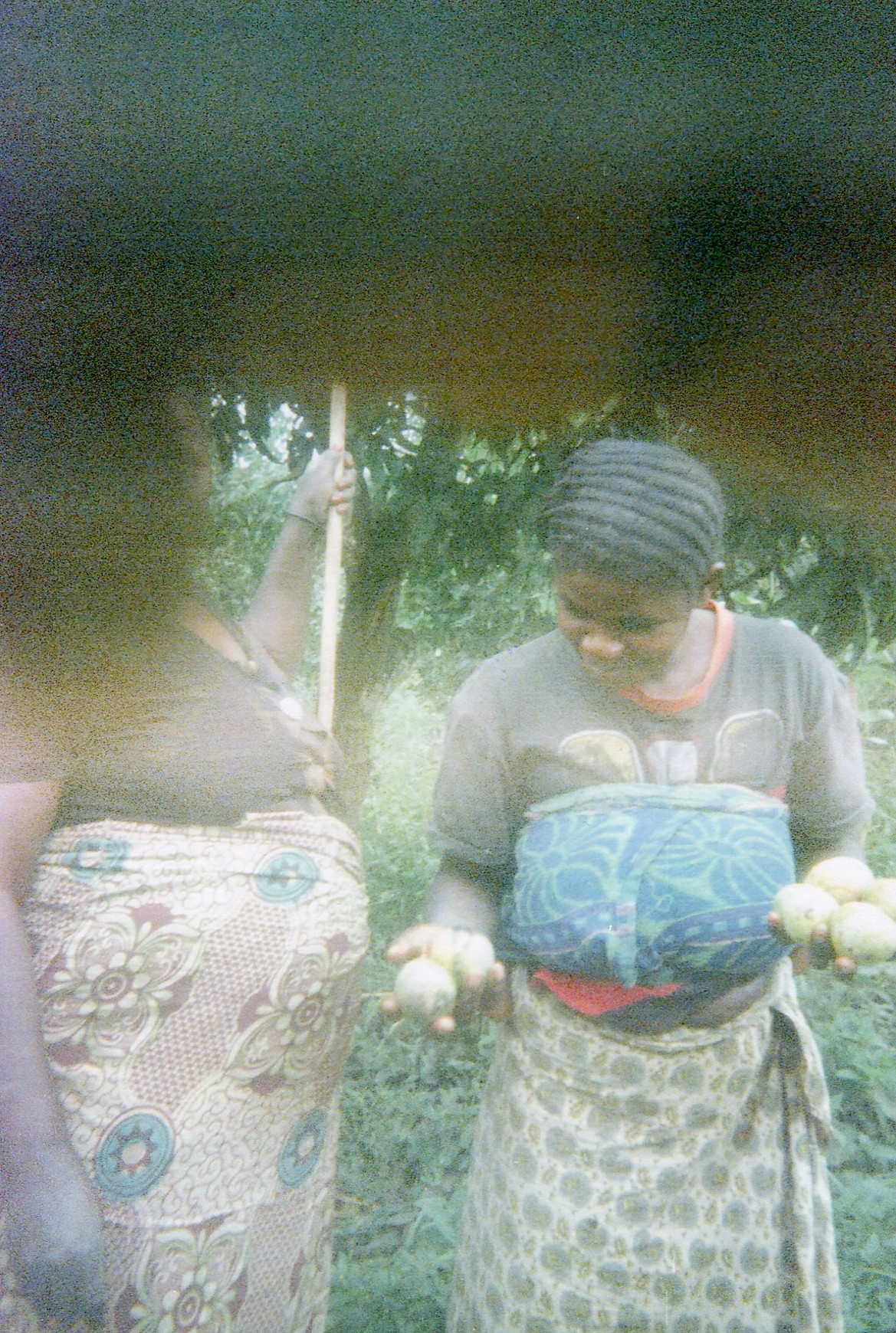 The women cook the fruits in the bush to feed their families.