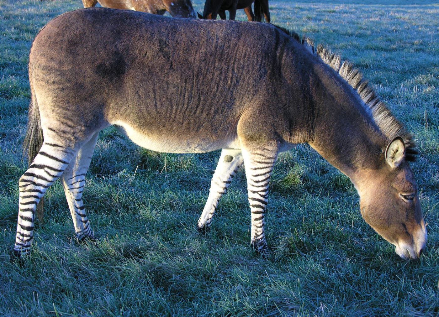 Zonkey-Slideshow_final.jpg