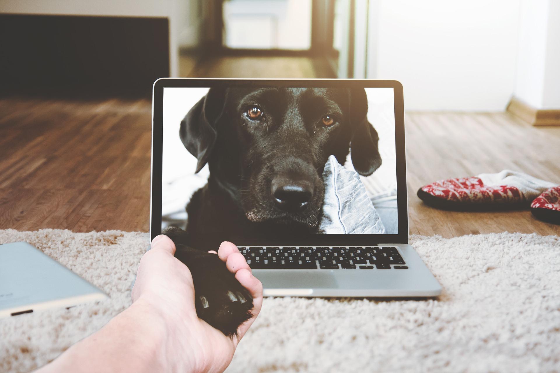 dog plus laptop.jpg