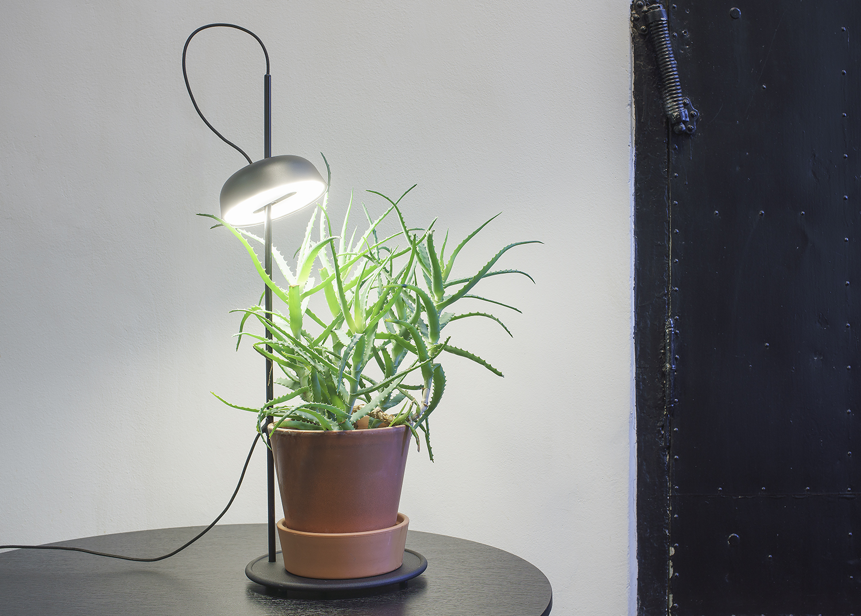 Elementa - Kilight