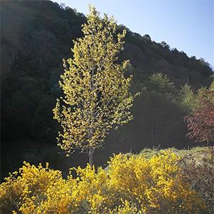 Catalyst §46   The Aspen Tree (Tree 6)