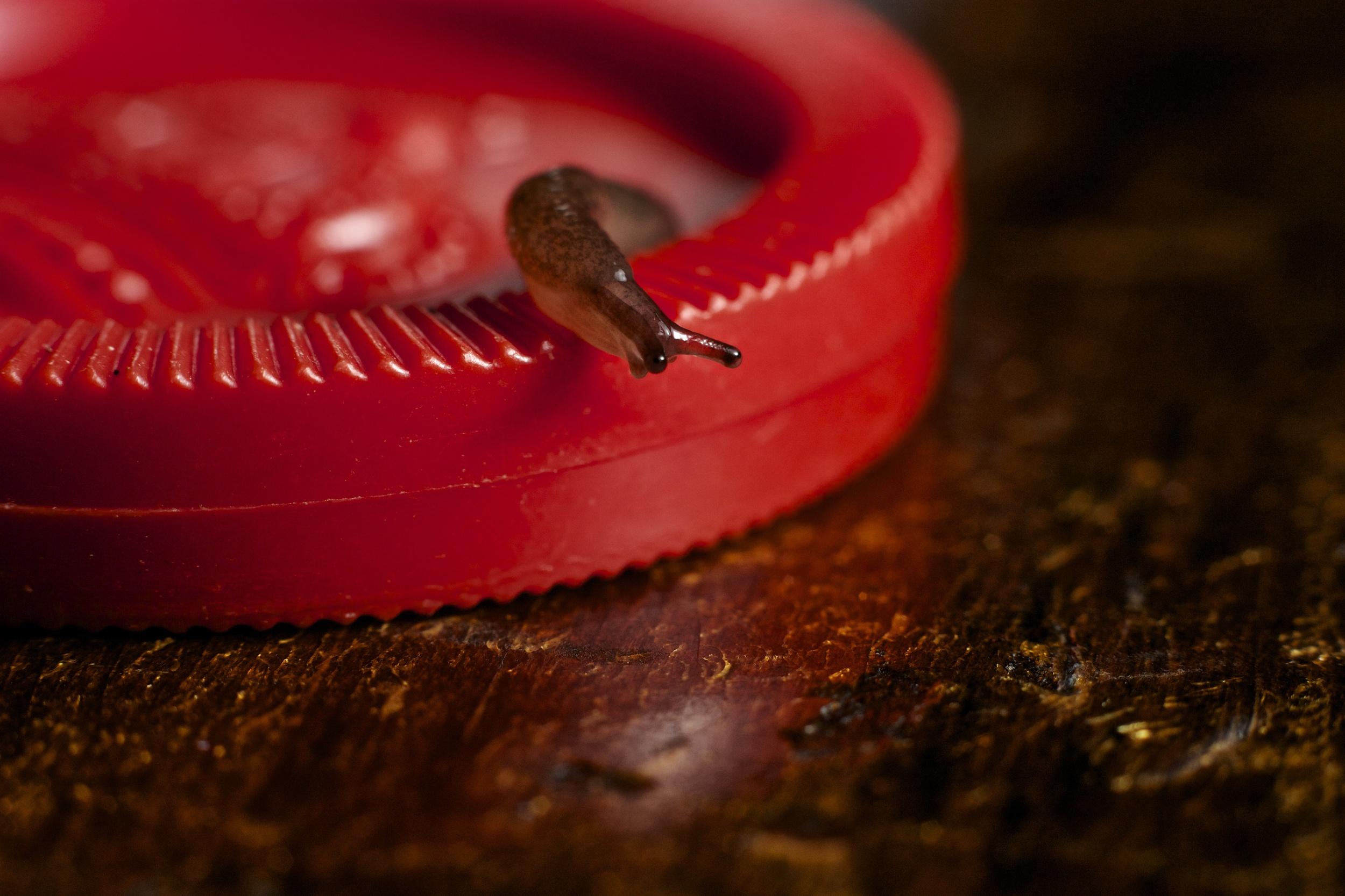 Slug on Checker