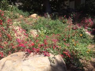 flowering natives in June.jpeg
