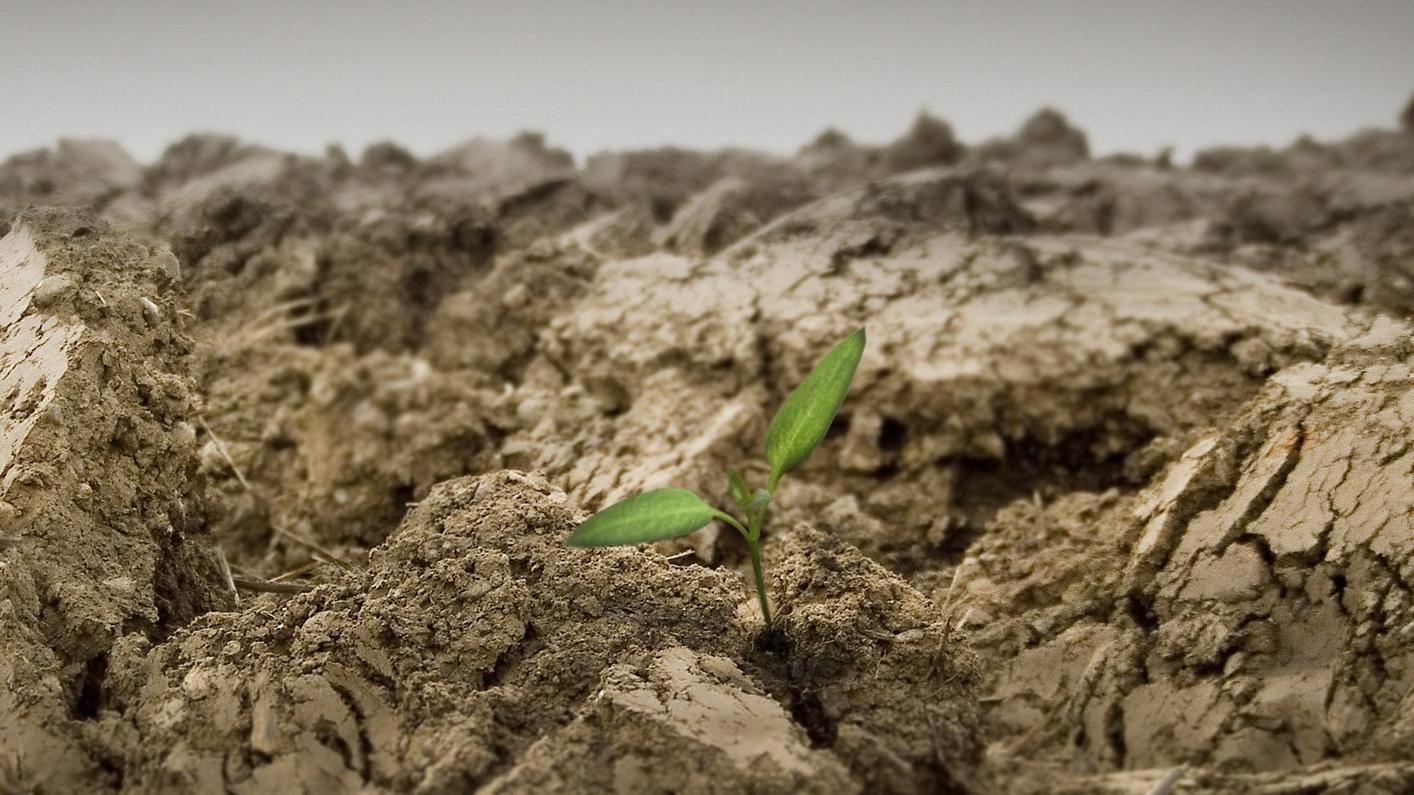 Plant a Church -