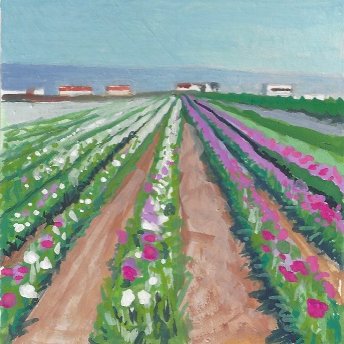 Lompoc Flower Fields