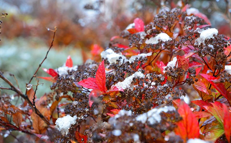 First snow of November, 2015!  -  Photo credit: Lawrence Jansen