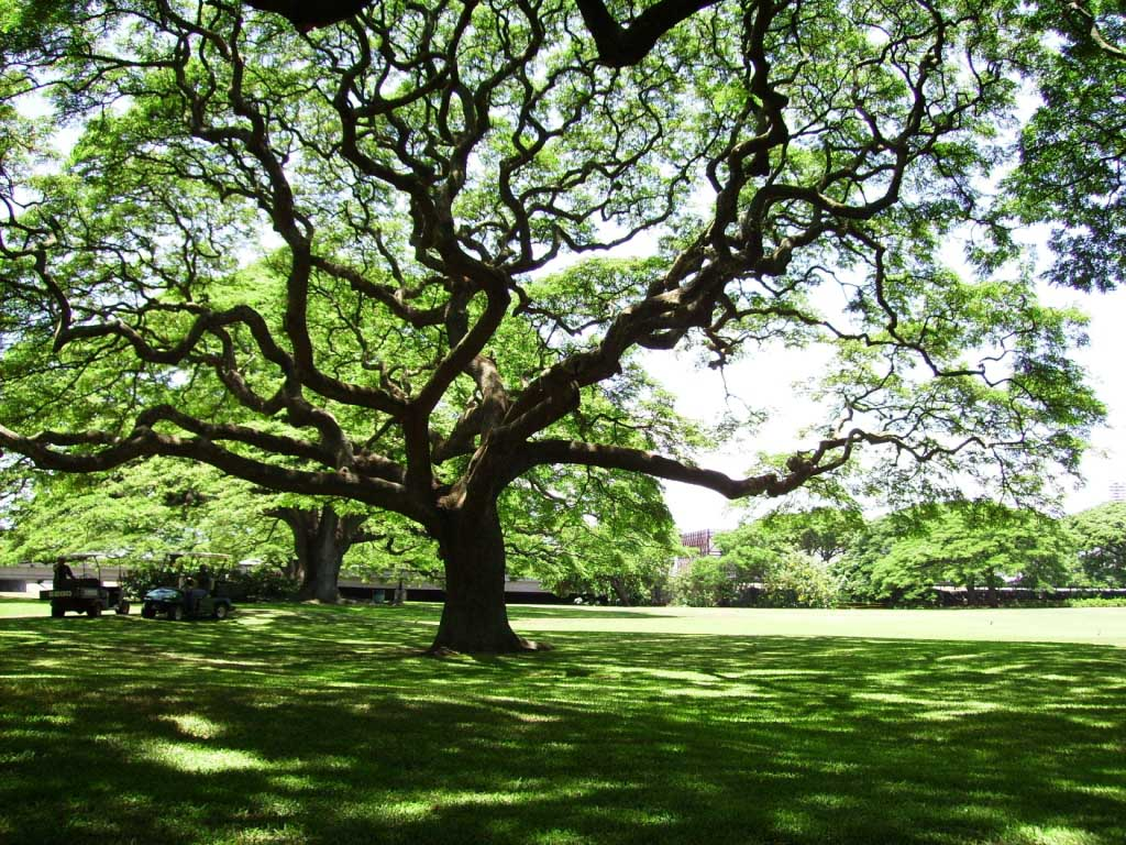 tree-of-life-branches.jpg