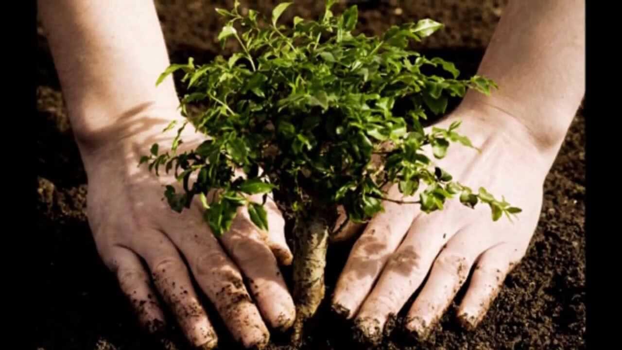 why-plant-a-tree.jpg