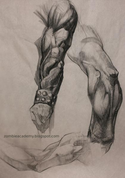 Bridgman and Frazetta anatomy study
