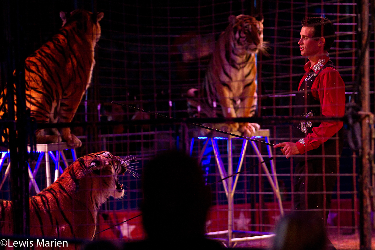 Ryan Holder, of St. Louis, does an act with tigers during the Kelly Miller Circus's performance Oct. 2 at the Calvary Assembly of God's church grounds in Galesburg, Ill.