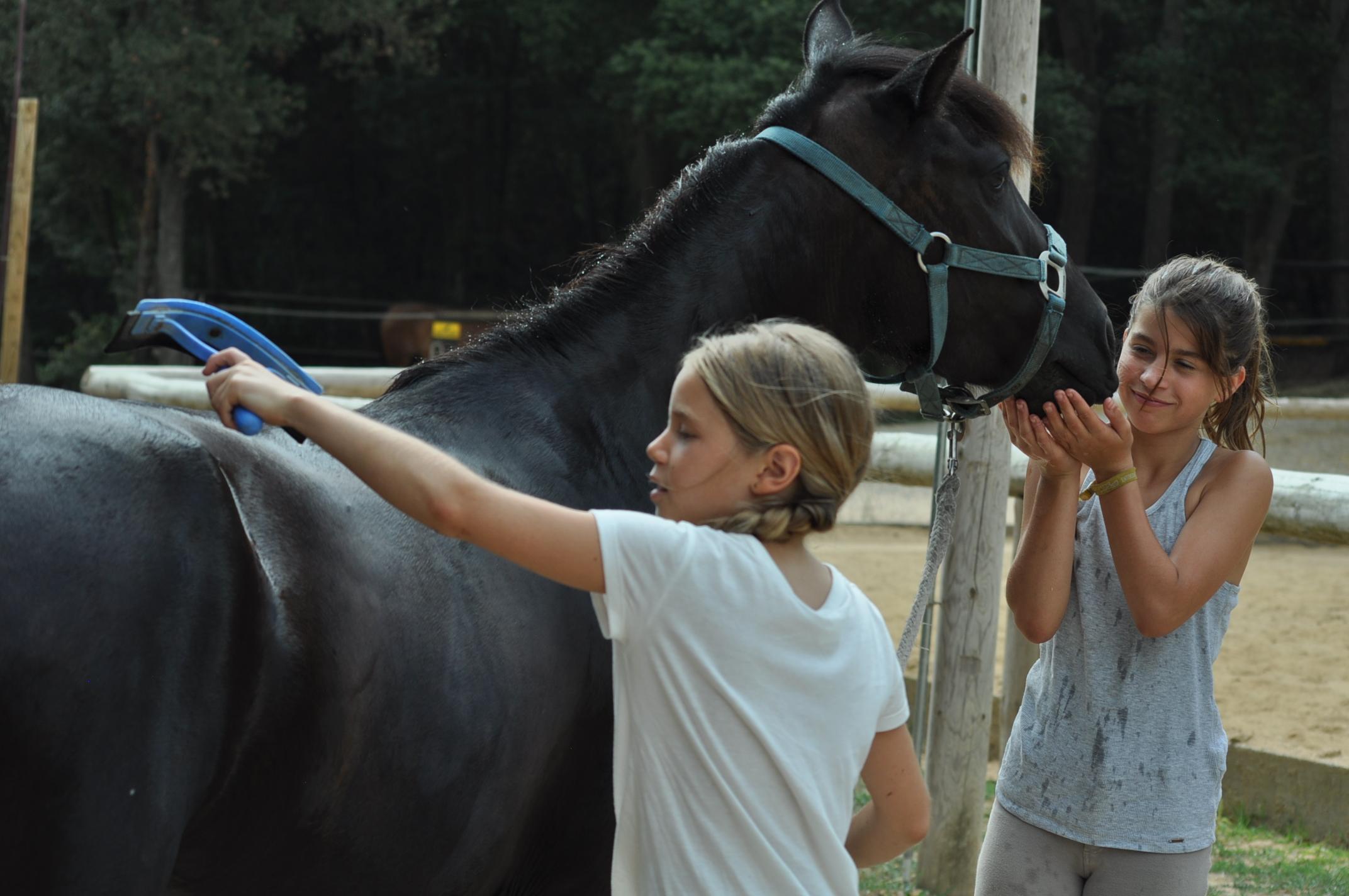 amor por los caballos.JPG
