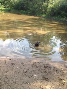 shasta-puddle.JPG