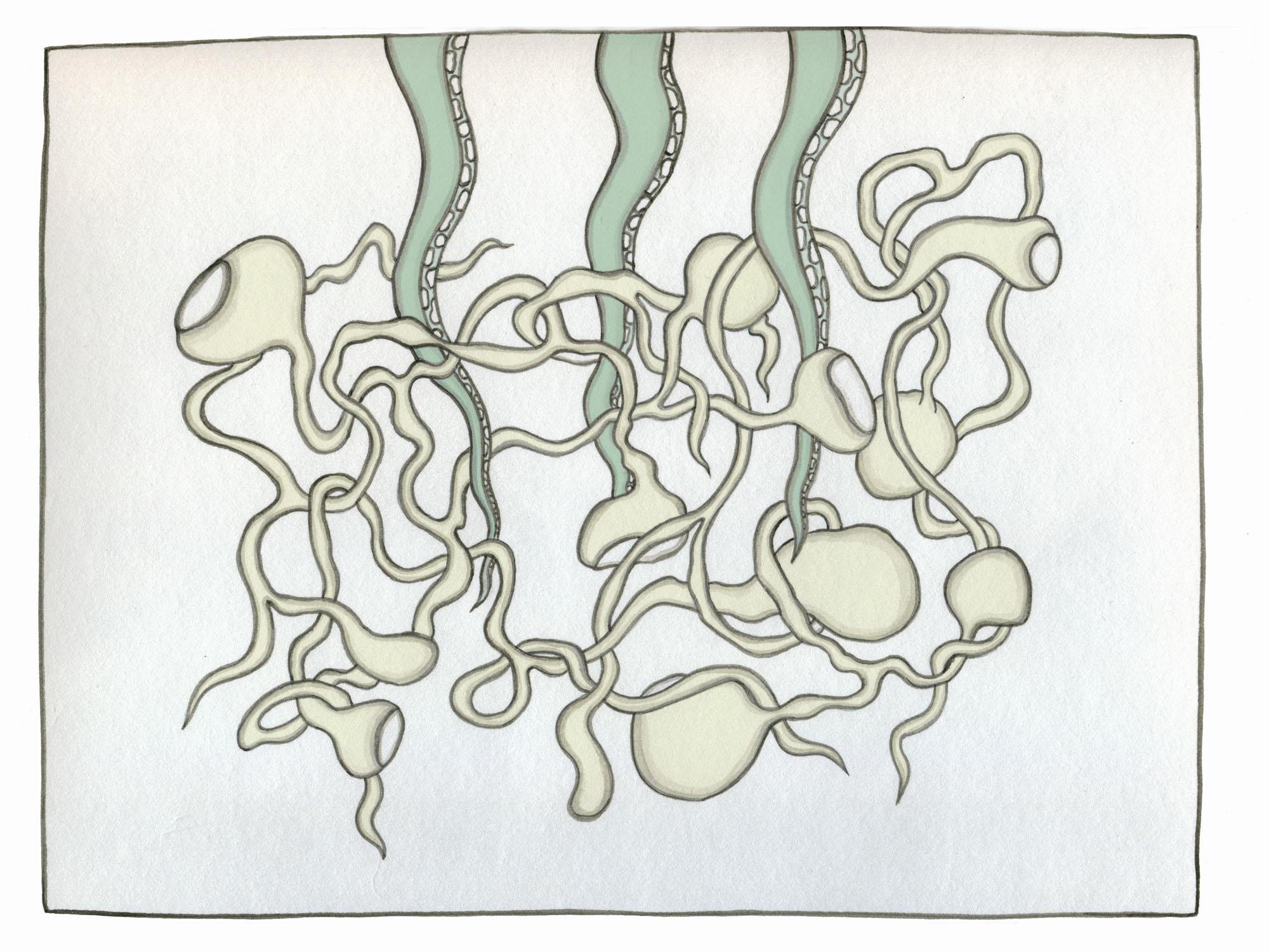 3 tentacles in seaweed #2.jpg
