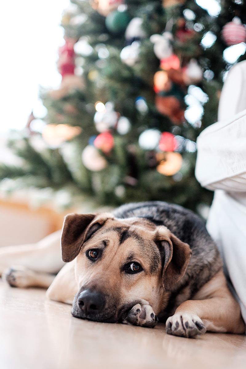 Petite déprime de Noël?