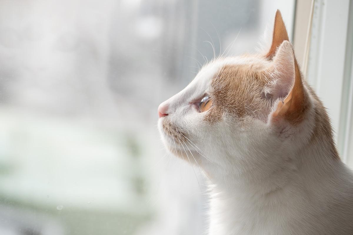 Mya watching something outside