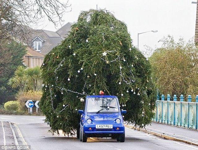christmas_tree_00.jpg