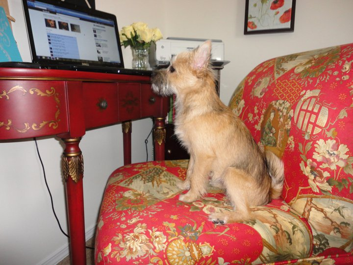 Even Moxie used it to update her FB status