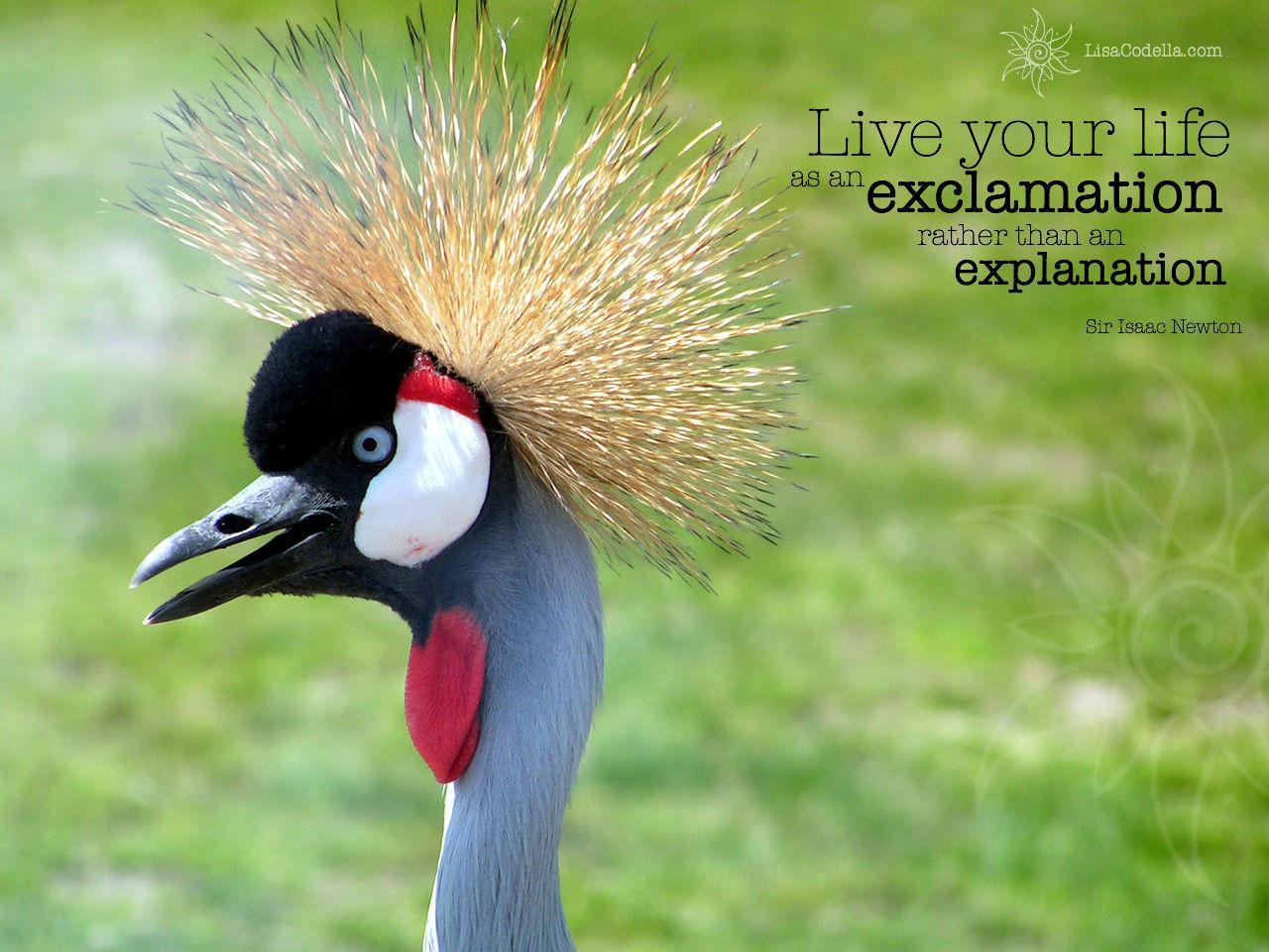 lisa-codella-independent-bird.jpg