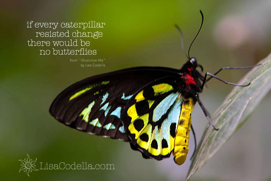 bahama butterfly.jpg