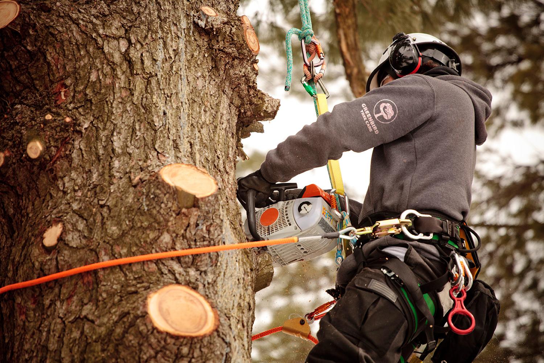 arborist-in-tree1.jpg