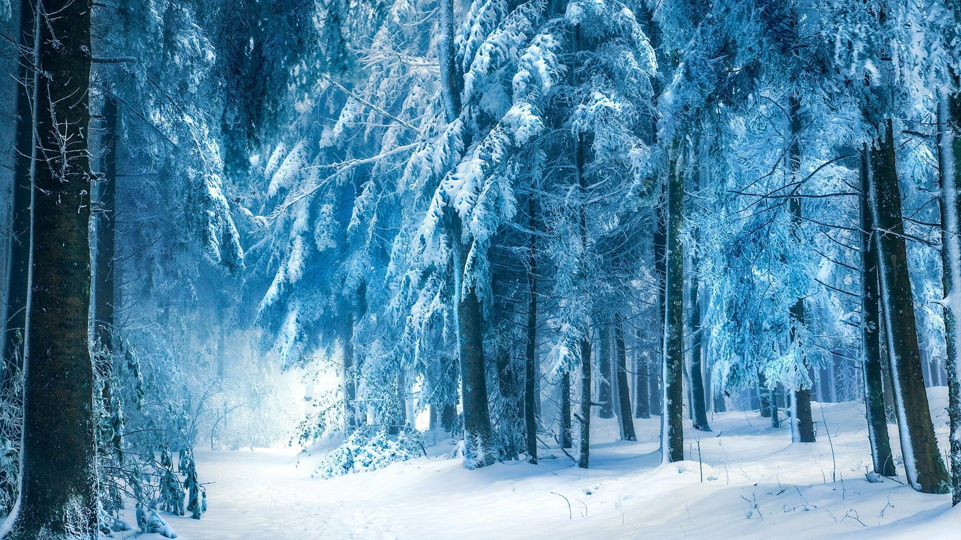 vunature.com-trees-snow-nature-seasons-landscapes-winter-roads-trail-path-forest-hd-picture-free-1920x1080.jpg