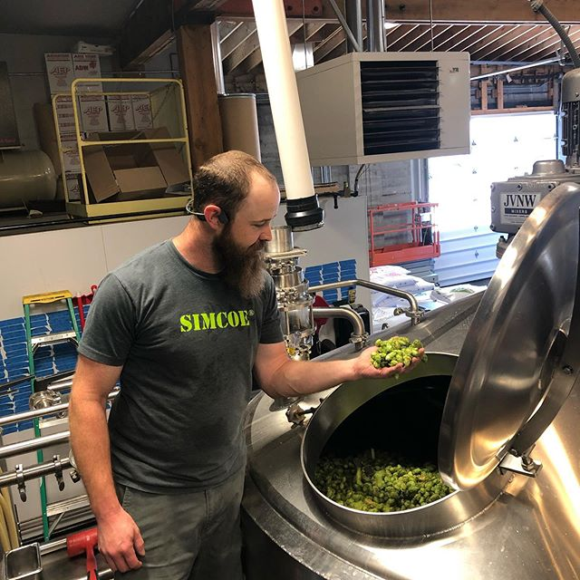We're brewing Fresh Hop Pallet Jack IPA on our production brewery today! It took a truckload of @perraultfarms Simcoe hops to get the proper fresh hop addition of 560lbs. Aroma meter is pegged! Fist bump👊 to @eli_dickison for wearing the Simcoe shirt.