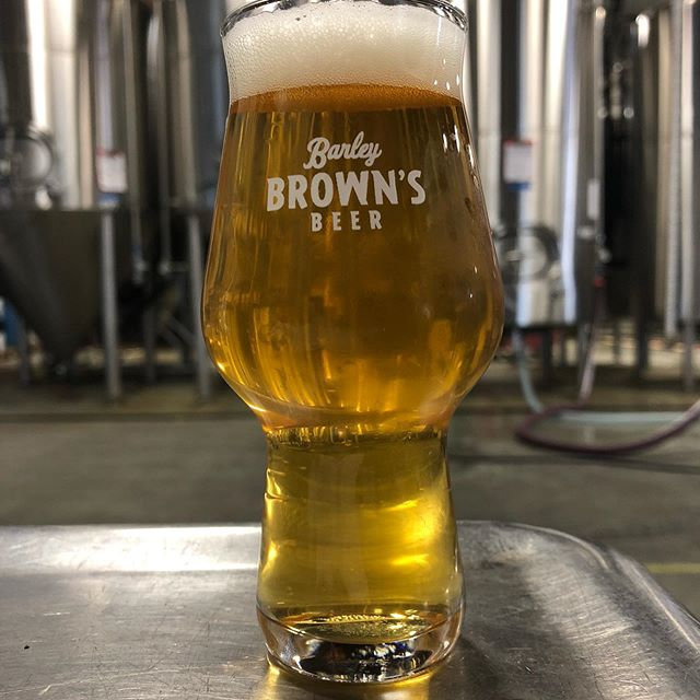 "Mitch. A Fresh Hop Pale Ale, brewed with Citra Hops from @perraultfarms. We named this beer after ""Mitch"" the cat that owns @tredeezyduzit one of our beloved ex-brewers. Trevor quit us to go to Medial School 🙄. Look for Mitch to hit the taps next week."