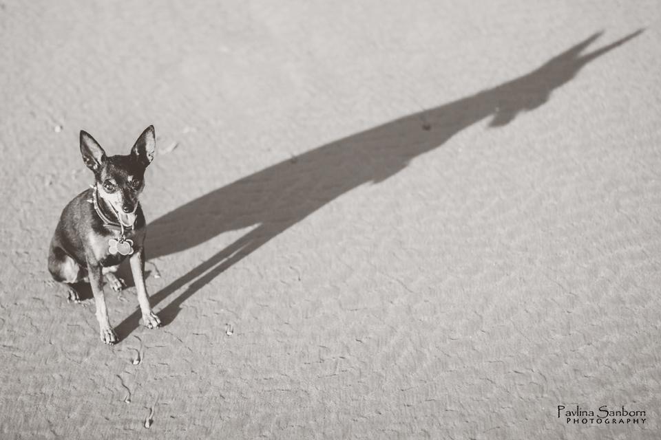 Top Ten Image: Shadows