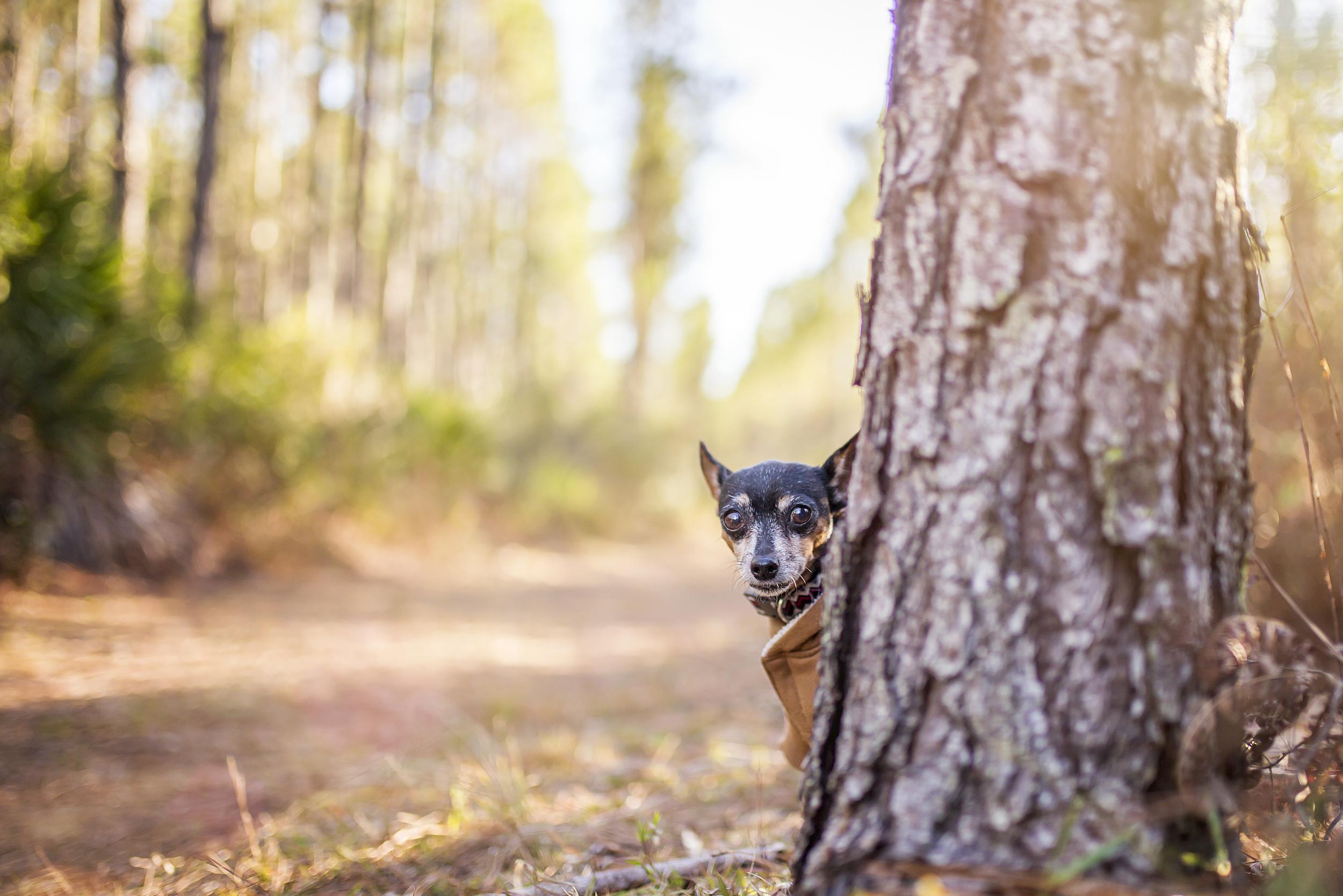 Kika peeking