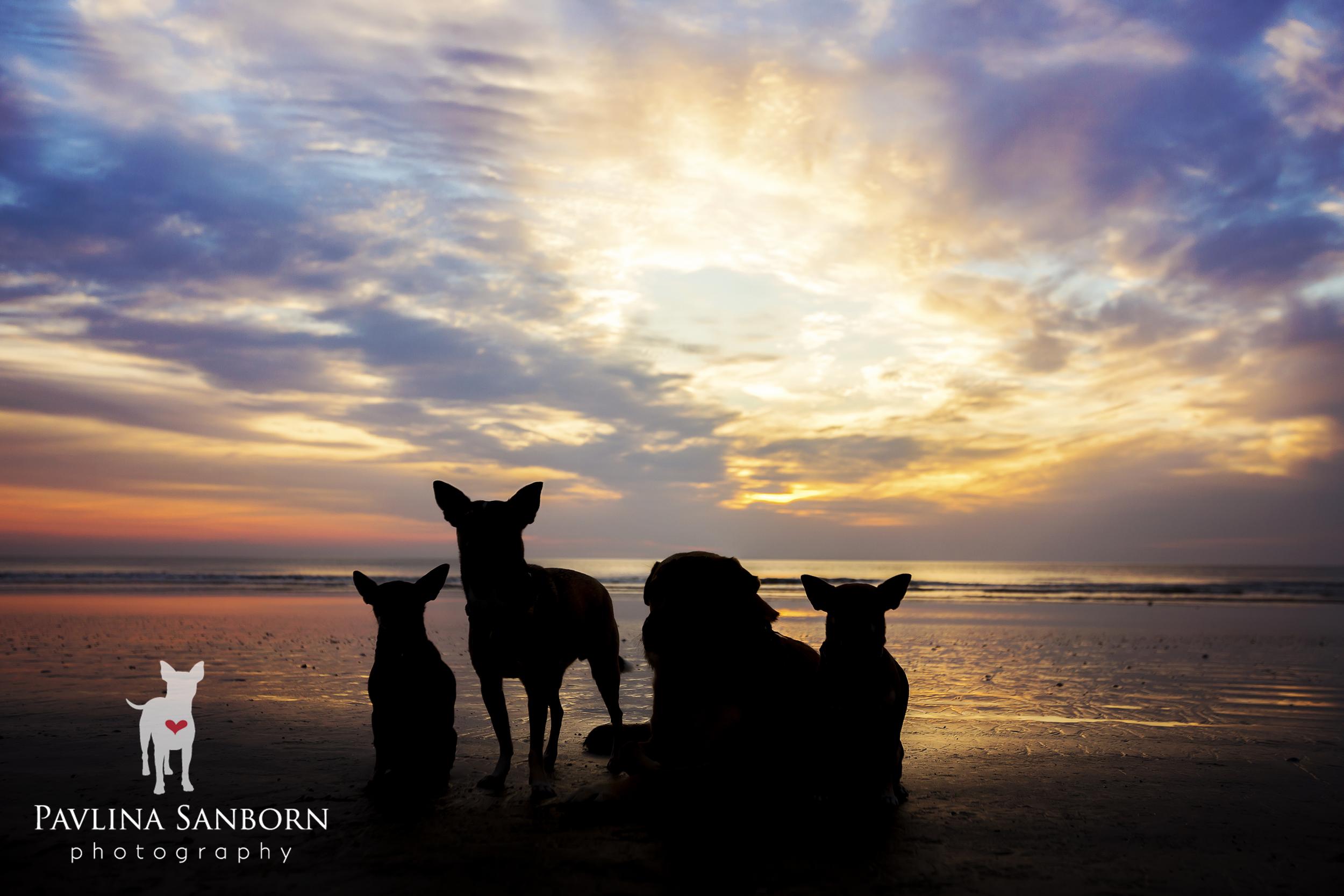 tampa_bay_sarasota_best_pet_photography.jpg