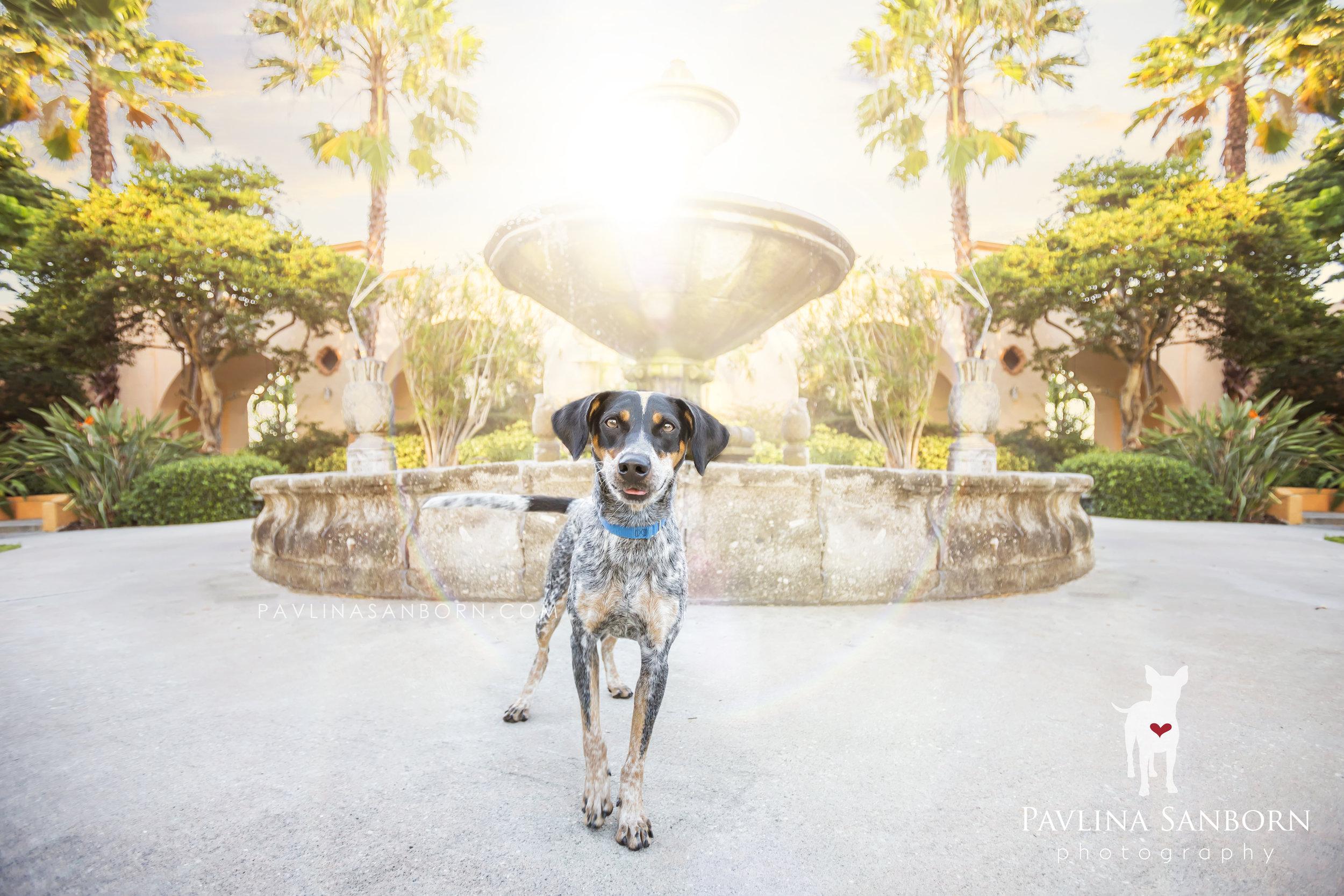 Sarasota_Pet_Photography.jpg