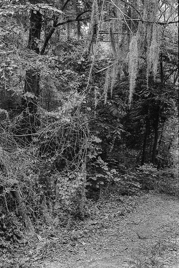 Trail, Raymond, Mississippi, May 2013