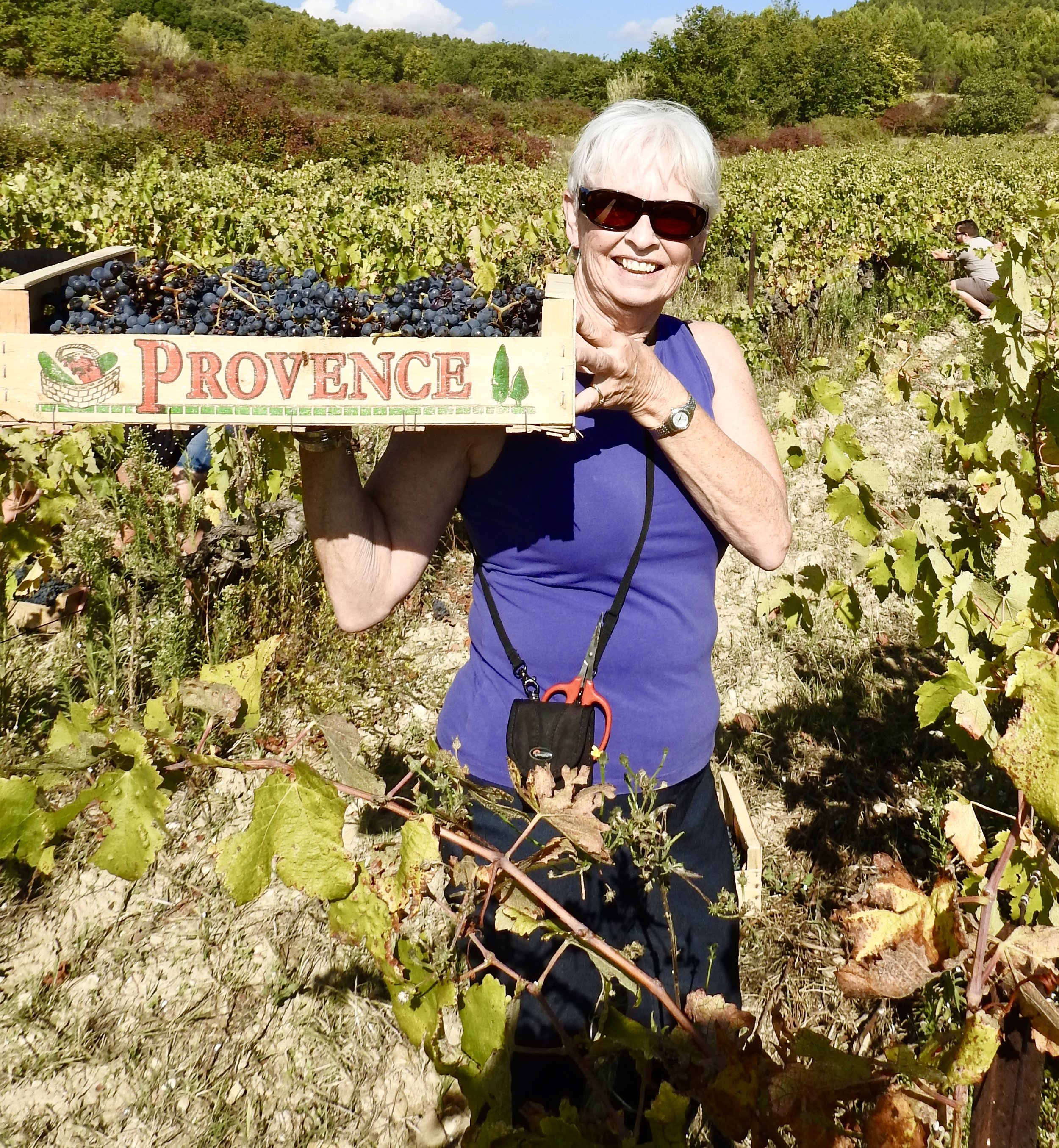 Provence tour review