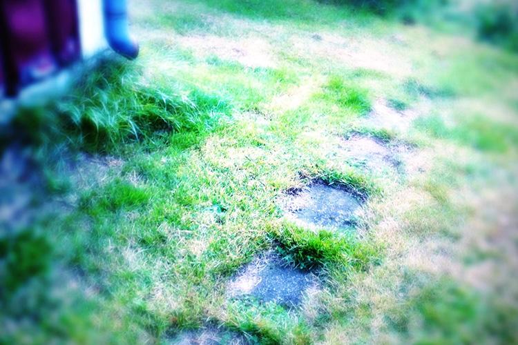 stig med daggigt gräs