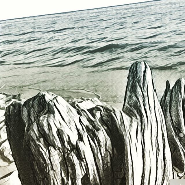Digital Illustration of Lake Michigan and drift wood based on a photo I shot in Muskegon, MI