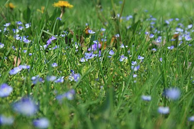 Grass+Flowers.JPG