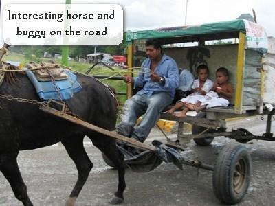 Horse buggy bus.jpg
