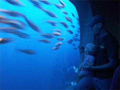 blue-fish-400.jpg