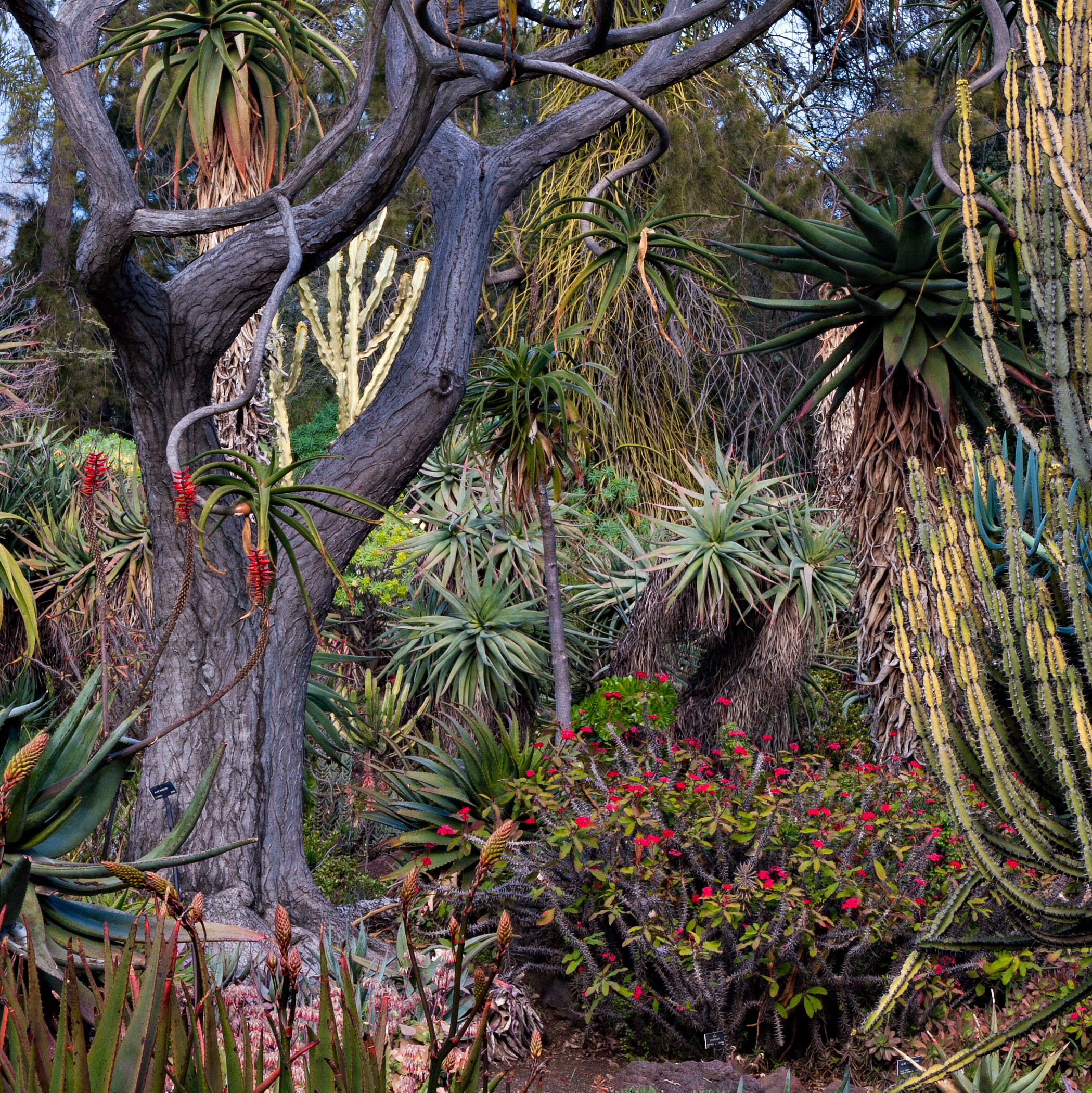 Public Gardens of California