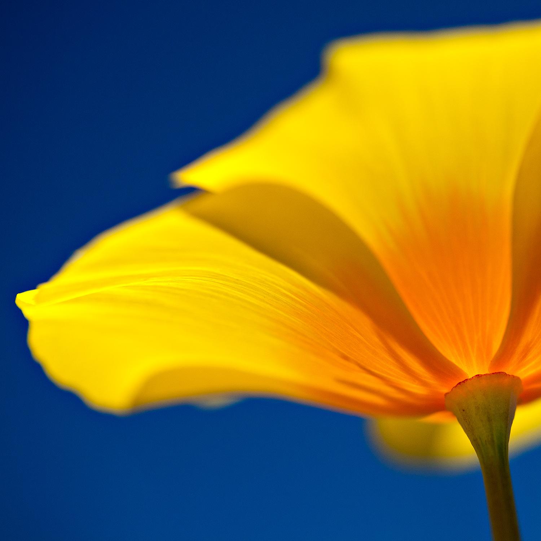 Intimate Flora