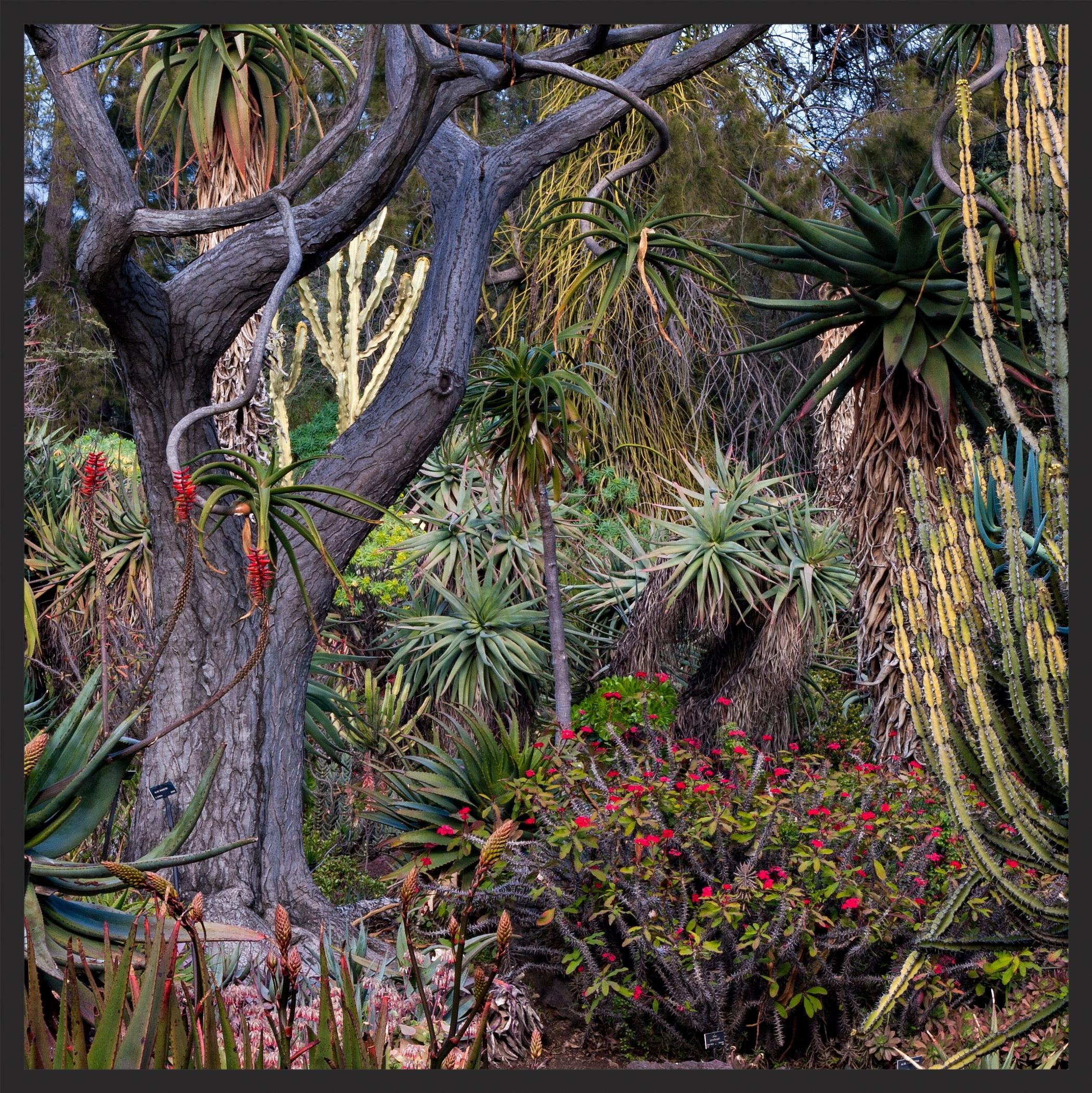 Mosquin-20060318-11006-huntington-gardens-1500sq.jpg