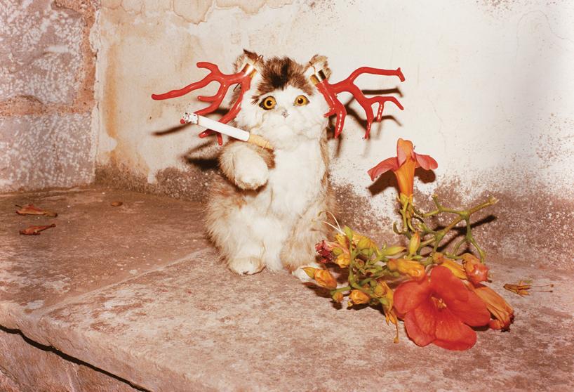 'Cat Smoking', Hydra, 2012