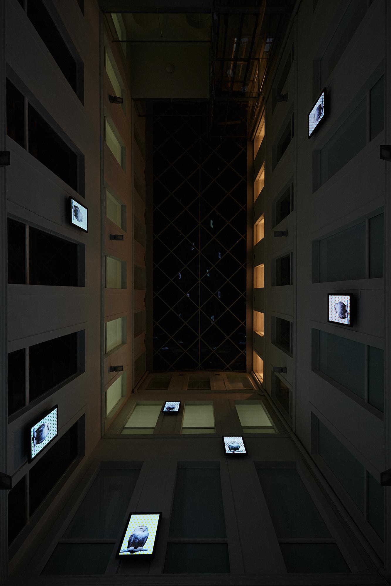Robert_Willson_exhibition_10.jpg