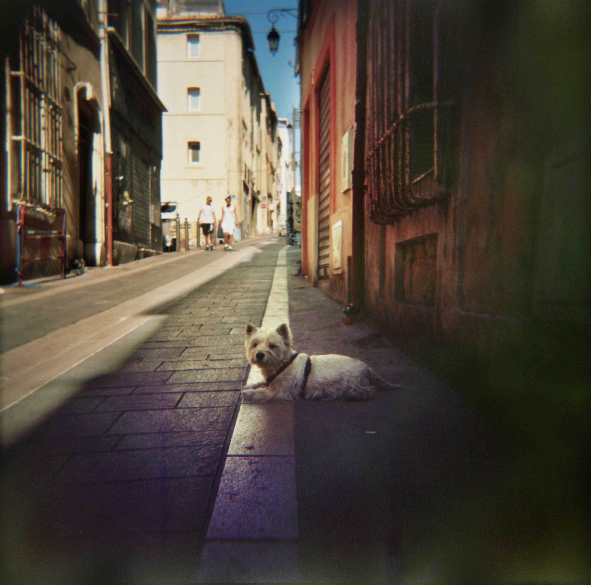 old one from Marseille. combining two things I love, Analogue film and Dogs..