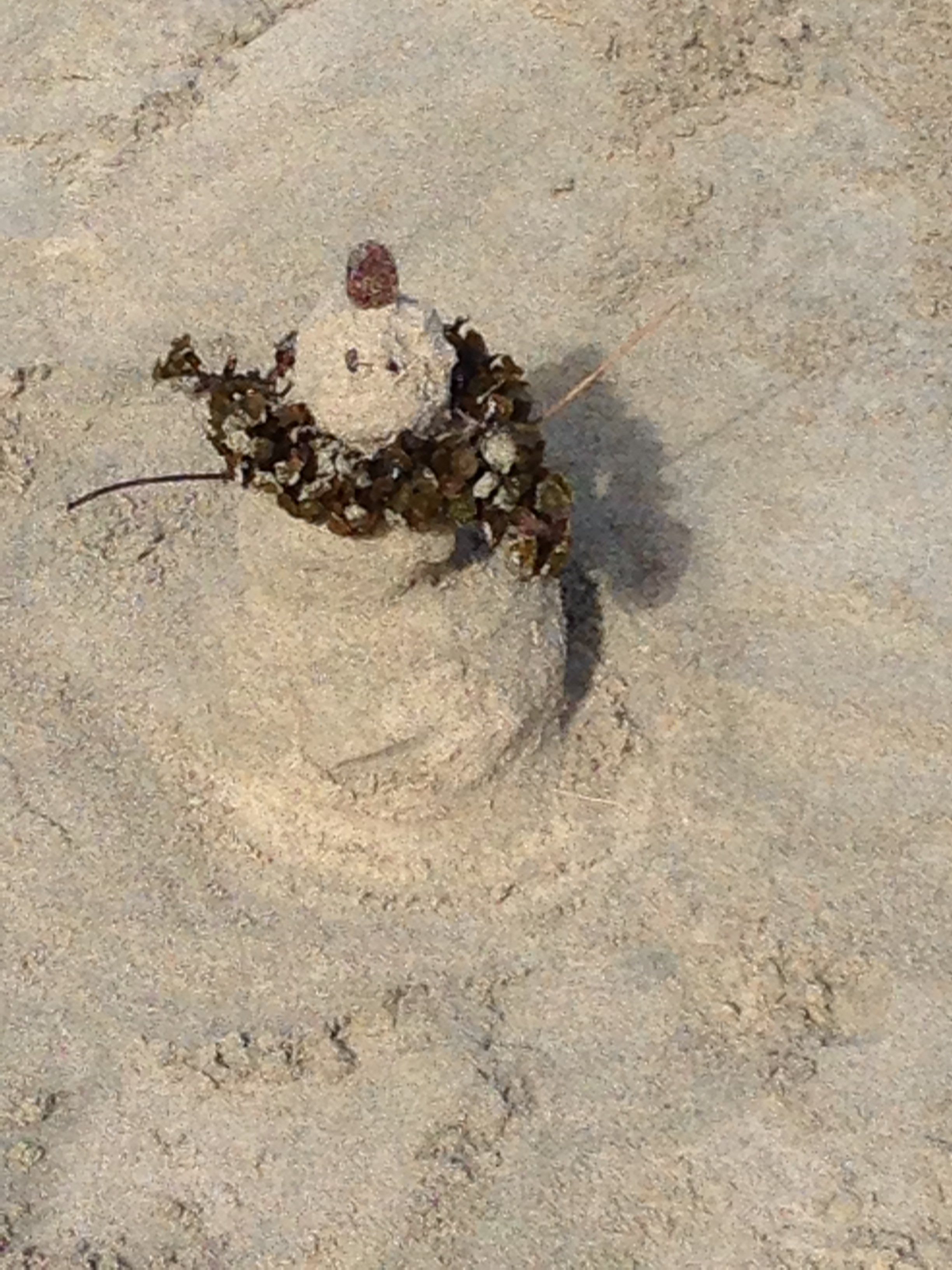 The Sandman. He comes for you when you're sleeping.