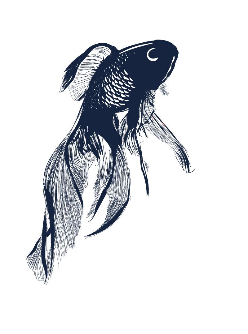 poisson-koï-Musca-Paris
