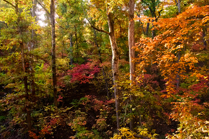 Drive the Glade Top Trail in Southern Missouri.