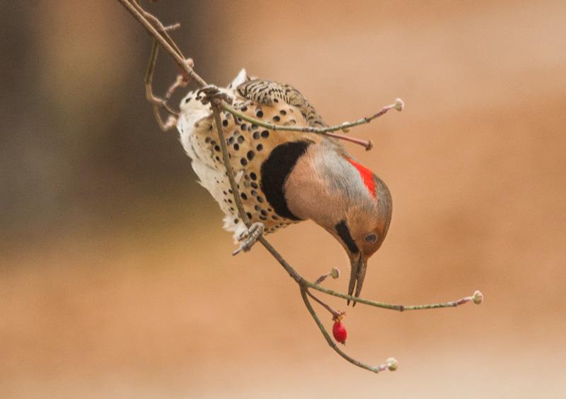 Theodosia Birdwatching