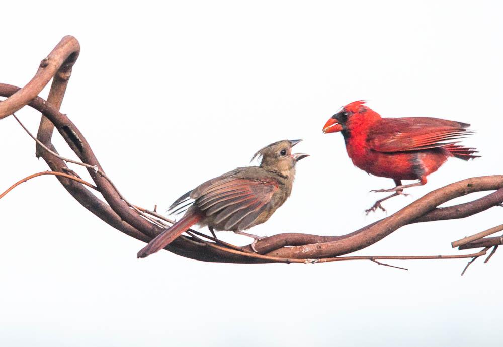 Ozark County Bird Feeding