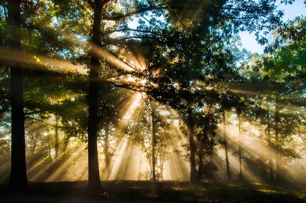 Ozark County Woodland